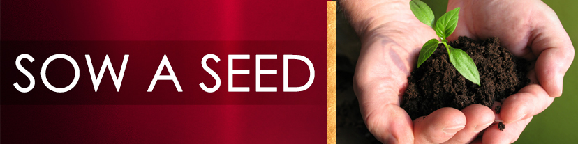 sow a seed banner